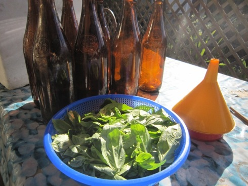 Basil for the bottles