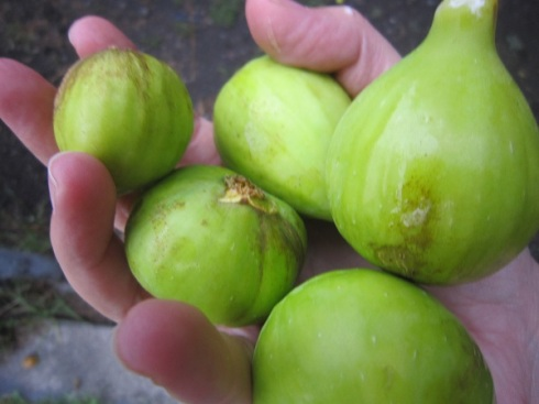 Figs in hand