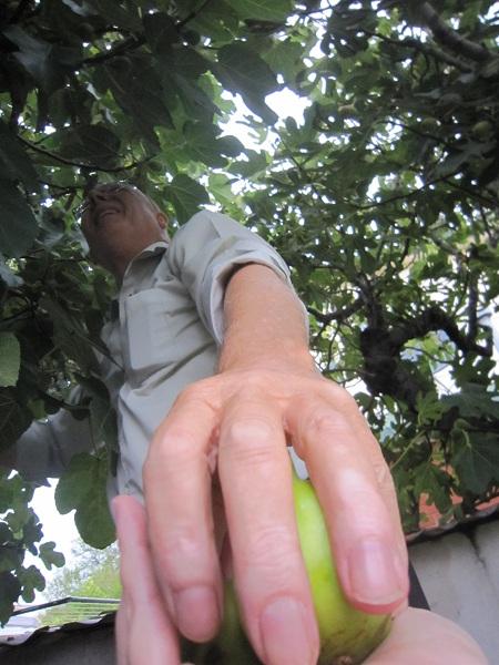 Handing down figs